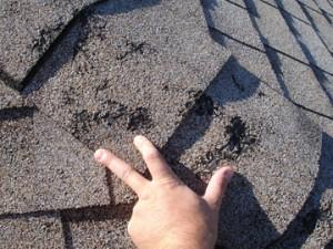 Hail damage to ridge cap shingles